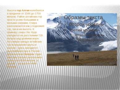 Высота гор Алтая колеблется в пределах от 1500 до 1750 метров. Район алтайски...