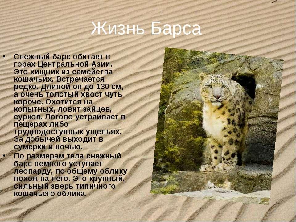 Жизнь Барса Снежный барсобитает в горах Центральной Азии. Это хищник из семе...