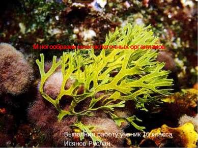 Многообразие многоклеточных организмов Выполнил работу ученик 10 класса Исяно...