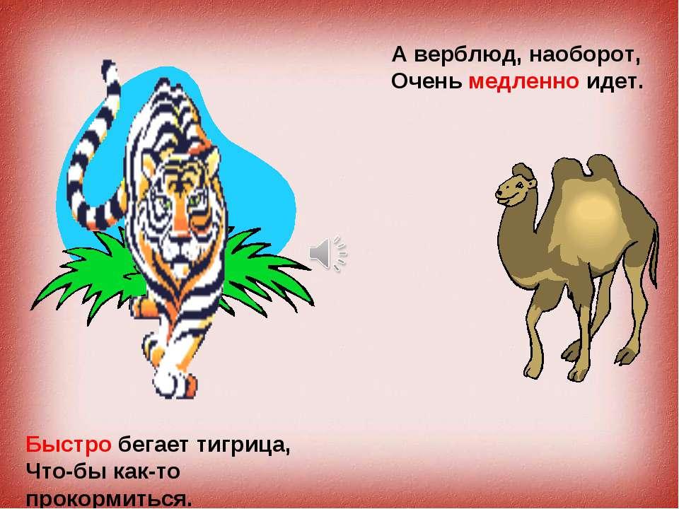 Быстро бегает тигрица, Что-бы как-т прокормиться. Быстро бегает тигрица, Что-...