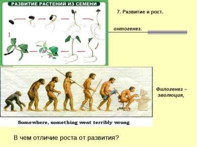 7. Развитие и рост. Филогенез – эволюция, онтогенез. В чем отличие роста от р...