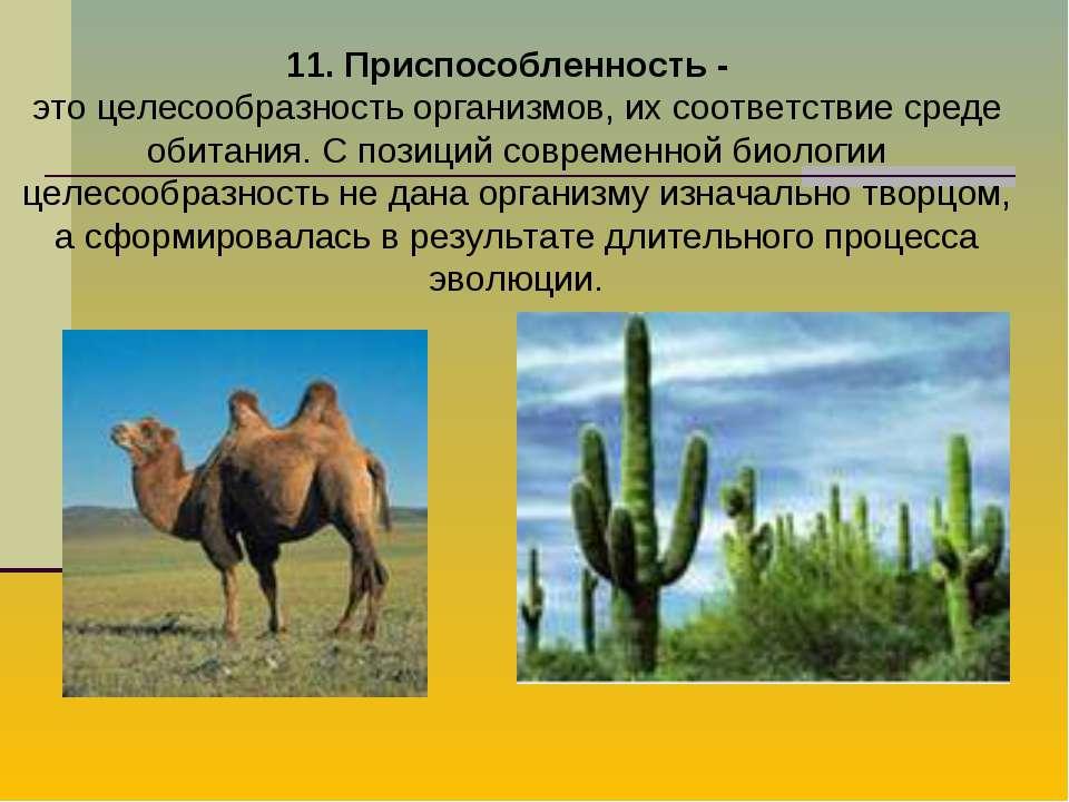 11. Приспособленность - это целесообразность организмов, их соответствие сред...