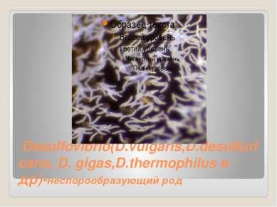 Desulfovibrio(D.vulgaris,D.desulfuricans, D.gigas,D.thermophilusи др)-несп...