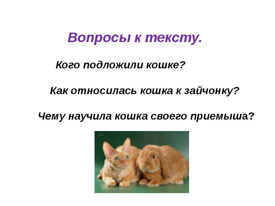 Вопросы к тексту. Кого подложили кошке? Как относилась кошка к зайчонку? Чему...