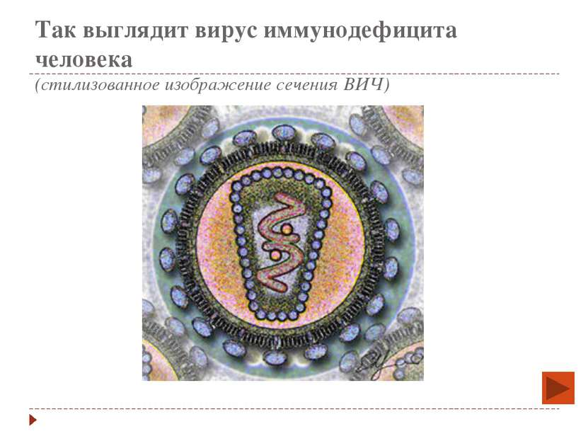 Так выглядит вирус иммунодефицита человека (стилизованное изображение сечения...
