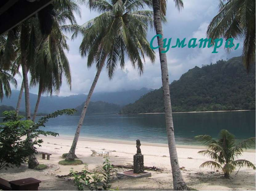 Суматра,