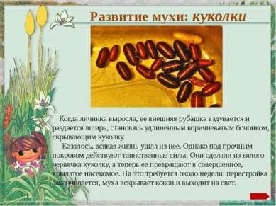 Автор шаблона Ранько Елена Алексеевна http://elenaranko.ucoz.ru/ Фон: сканиро...