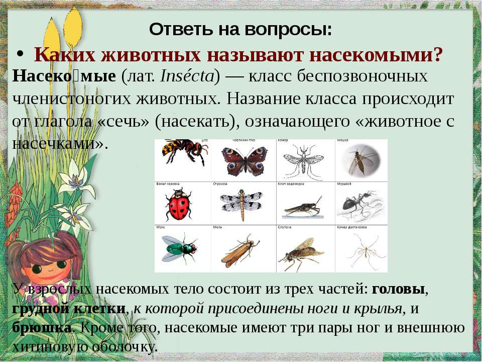 Ответь на вопросы: Каких животных называют насекомыми? Насеко мые (лат.Inséc...