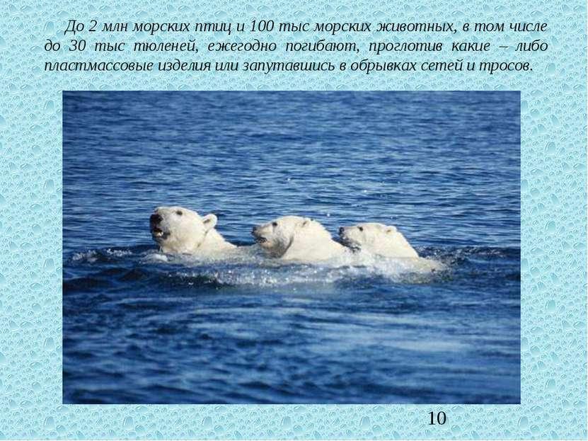 До 2 млн морских птиц и 100 тыс морских животных, в том числе до 30 тыс тюлен...