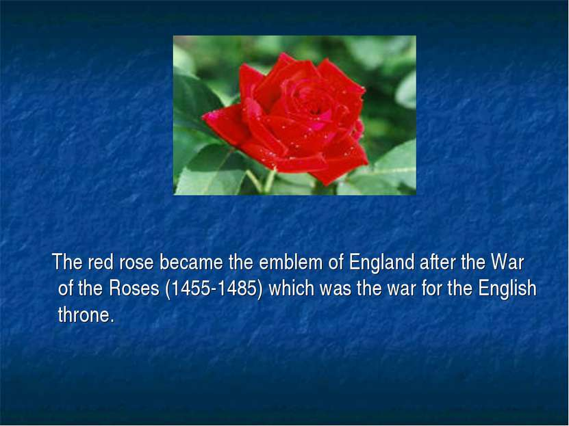 The red rose became the emblem of England after the War of the Roses (1455-14...