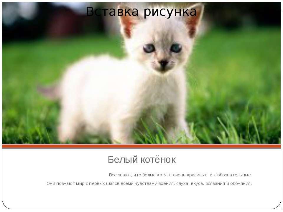 Белый котёнок Все знают, что белые котята очень красивые и любознательные. Он...