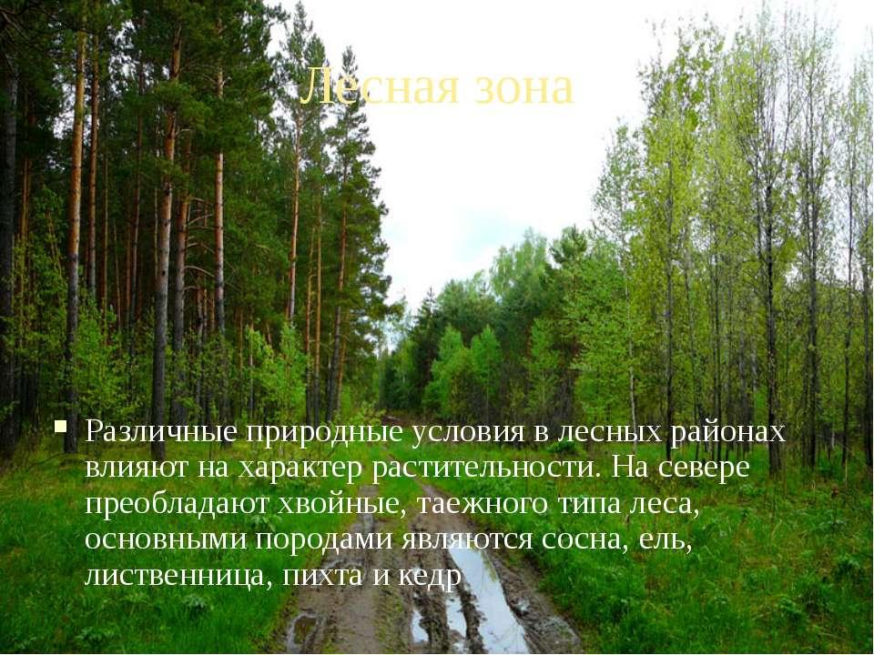 Лесная зона Различные природные условия в лесных районах влияют на характер р...