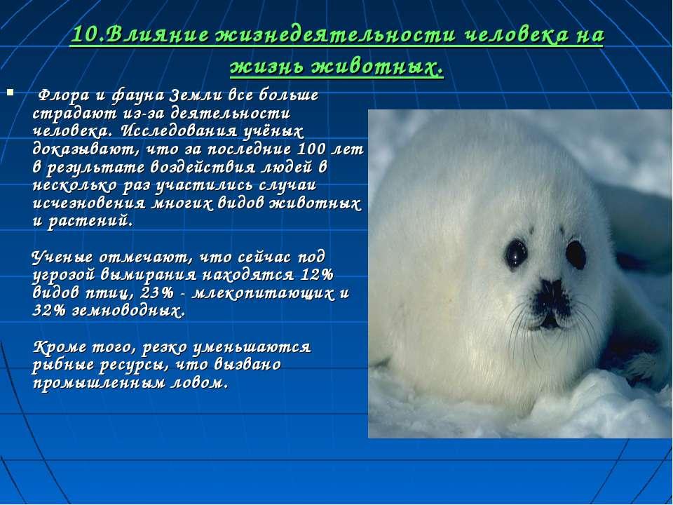 10.Влияние жизнедеятельности человека на жизнь животных. Флора и фауна Земли ...