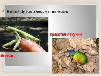 В нашей области очень много насекомых.