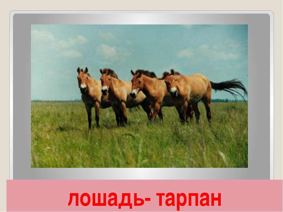 лошадь- тарпан