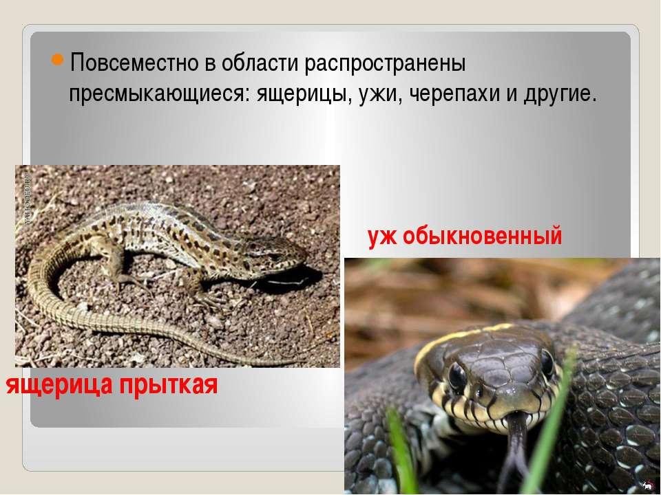 Повсеместно в области распространены пресмыкающиеся: ящерицы, ужи, черепахи и...