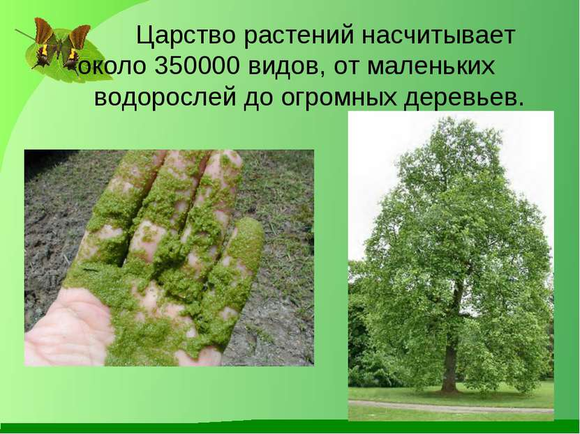 Царство растений насчитывает около 350000 видов, от маленьких водорослей до о...