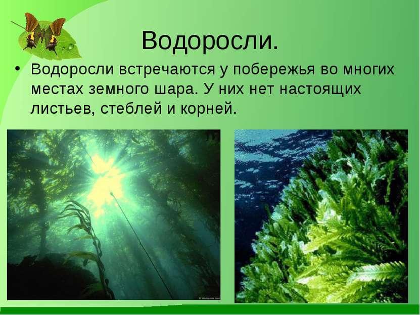 Водоросли. Водоросли встречаются у побережья во многих местах земного шара. У...