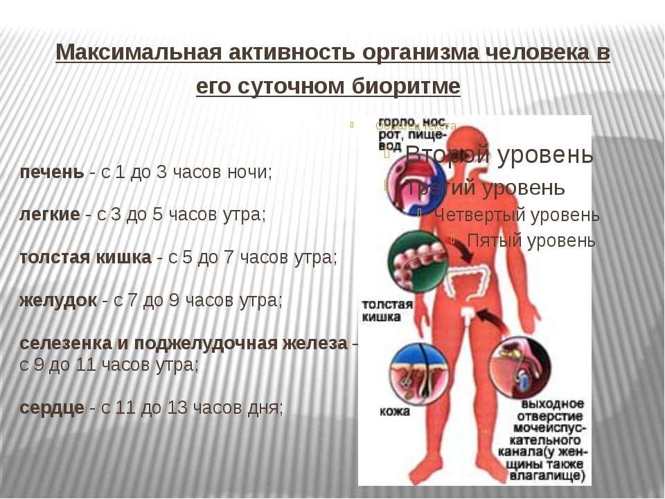 Максимальная активность организма человека в его суточном биоритме печень - с...