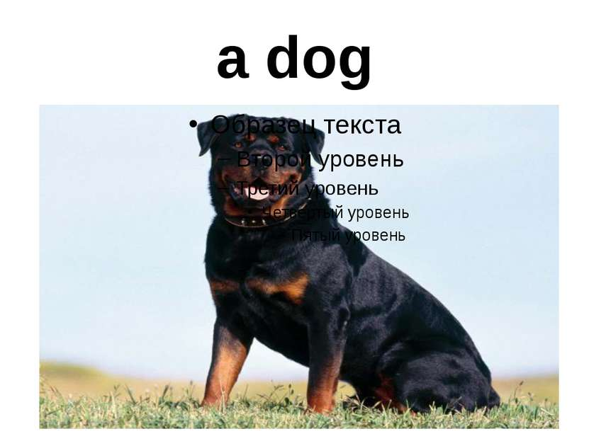 a dog