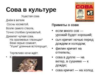 Сова в культуре Ушастая сова Днём в ветвях Сосны косматой, Возле самого ствол...