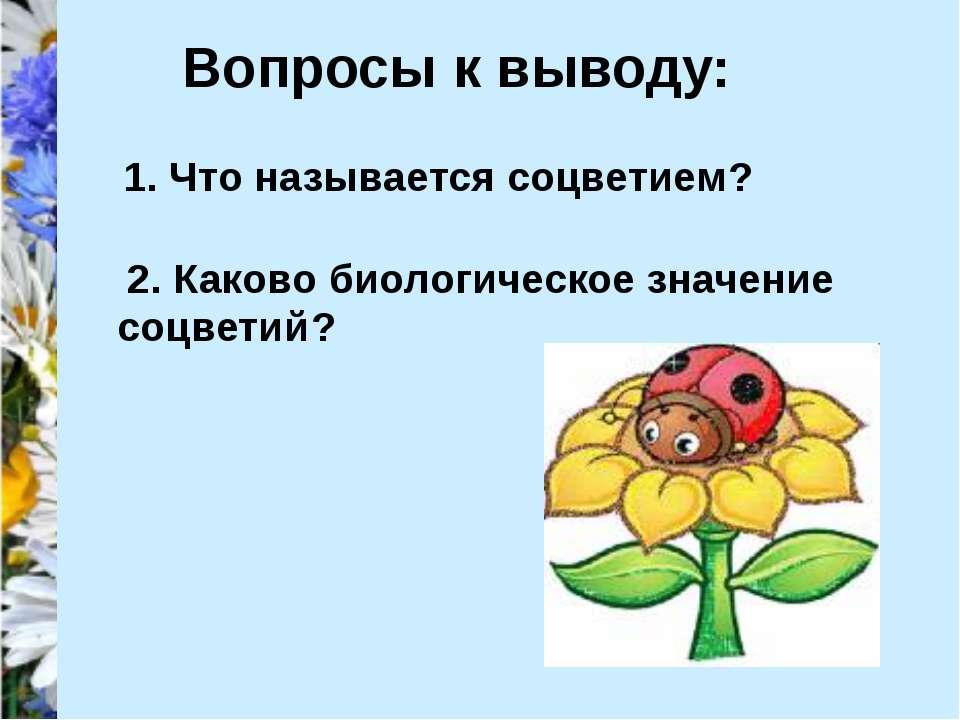 Вопросы к выводу: 1. Что называется соцветием ? 2. Каково биологическое значе...