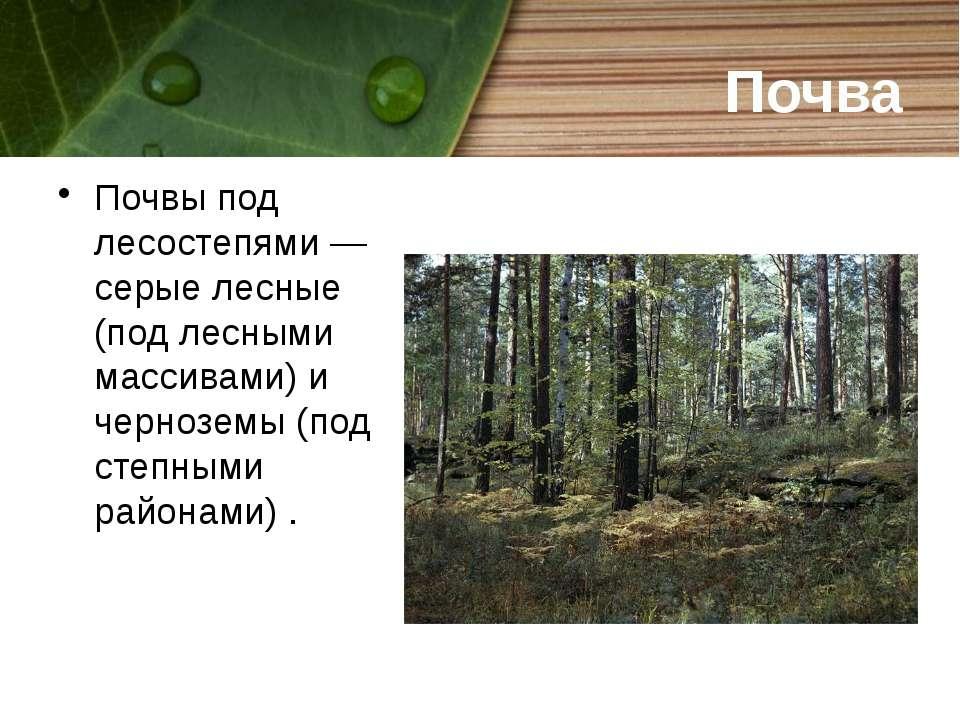 Почва Почвы под лесостепями — серые лесные (под лесными массивами) и чернозем...