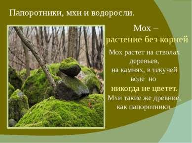 Папоротники, мхи и водоросли. Мох – растение без корней Мох растет на стволах...
