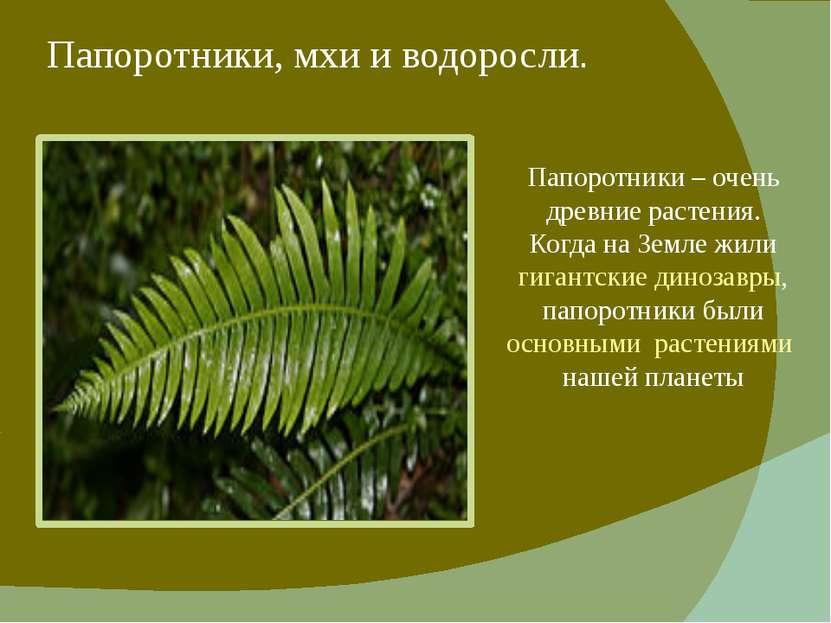 Папоротники, мхи и водоросли. Папоротники – очень древние растения. Когда на ...