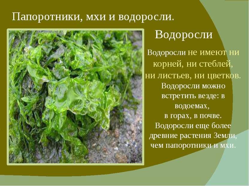 Папоротники, мхи и водоросли. Водоросли Водоросли не имеют ни корней, ни стеб...