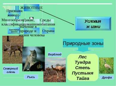 Условия жизни Характерные признаки Природные зоны Лес Тундра Степь Пустыня Та...