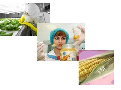 Чем опасны ГМО для окружающей среды? Научно зафиксированы отдельные факты уни...