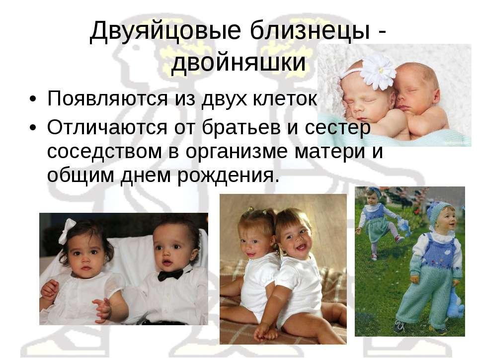 Двуяйцовые близнецы - двойняшки Появляются из двух клеток Отличаются от брать...