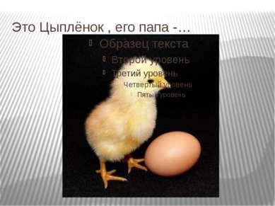 Это Цыплёнок , его папа -…