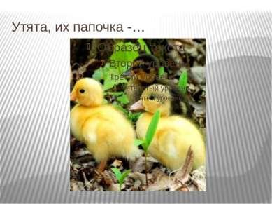 Утята, их папочка -…