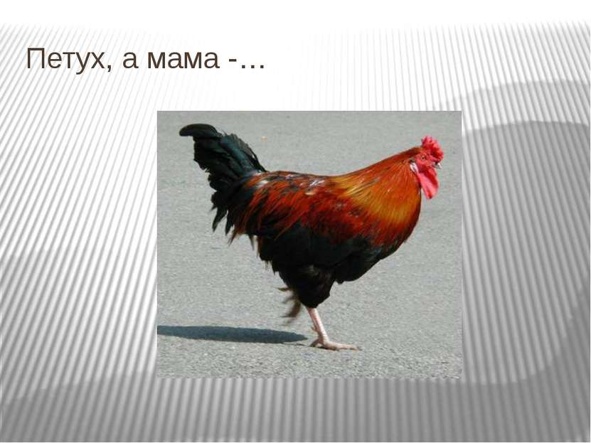 Петух, а мама -…