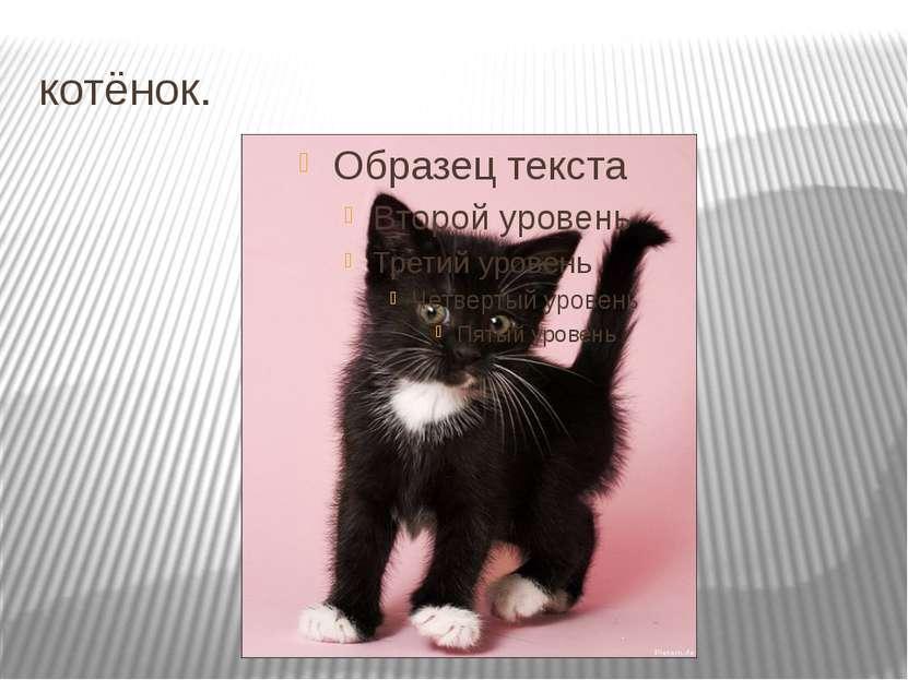 котёнок.