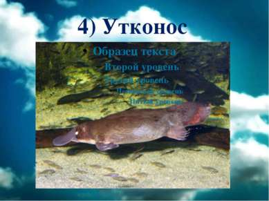 4) Утконос