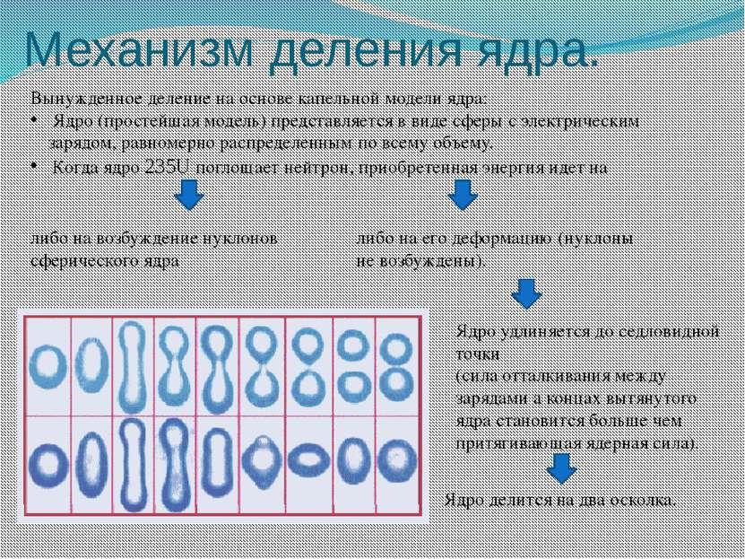 Механизм деления ядра.
