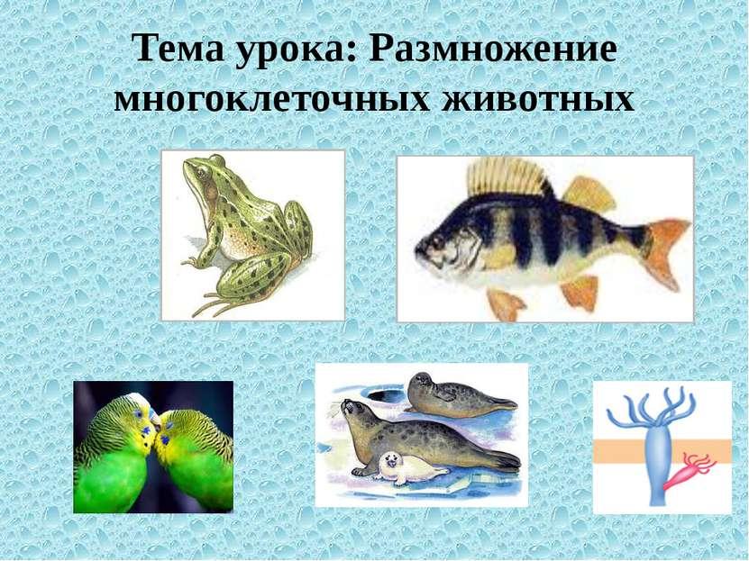 Тема урока: Размножение многоклеточных животных