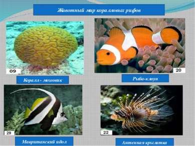 Животный мир коралловых рифов Коралл - мозговик Рыба-клоун Мавританский идол ...