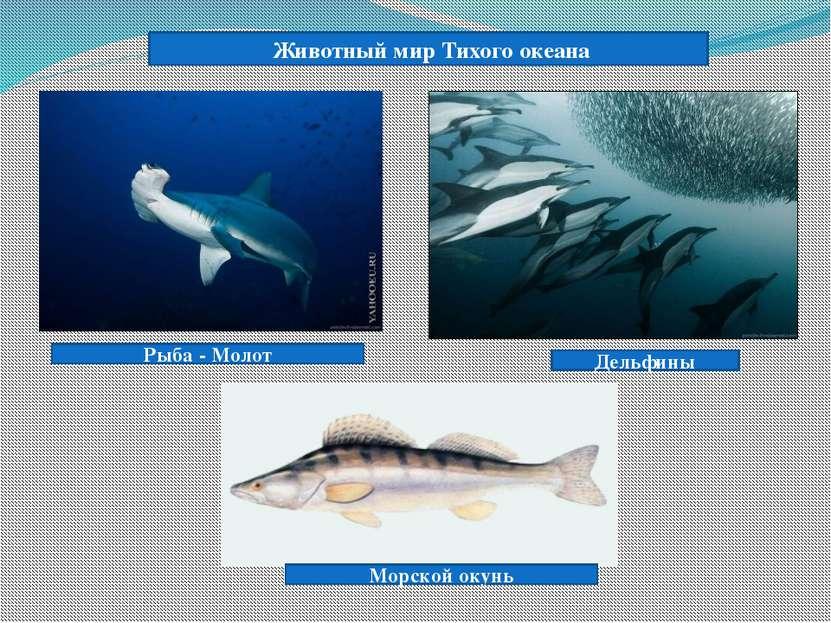 Рыба - Молот Животный мир Тихого океана Дельфины Морской окунь