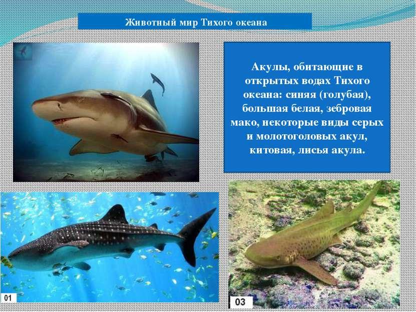 Животный мир Тихого океана Акулы, обитающие в открытых водах Тихого океана: с...