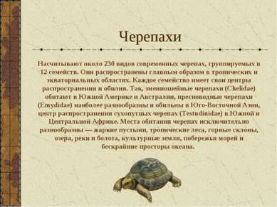 Черепахи Насчитывают около 230 видов современных черепах, группируемых в 12 с...