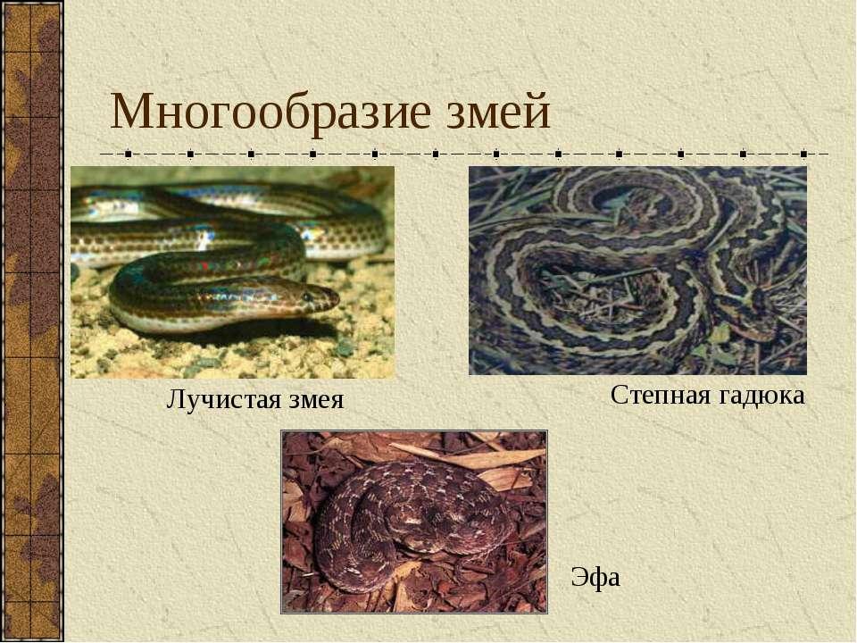 Многообразие змей Лучистая змея Степная гадюка Эфа