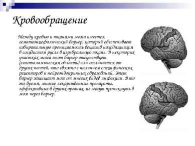 Кровообращение Между кровью и тканями мозга имеется гематоэнцефалический барь...