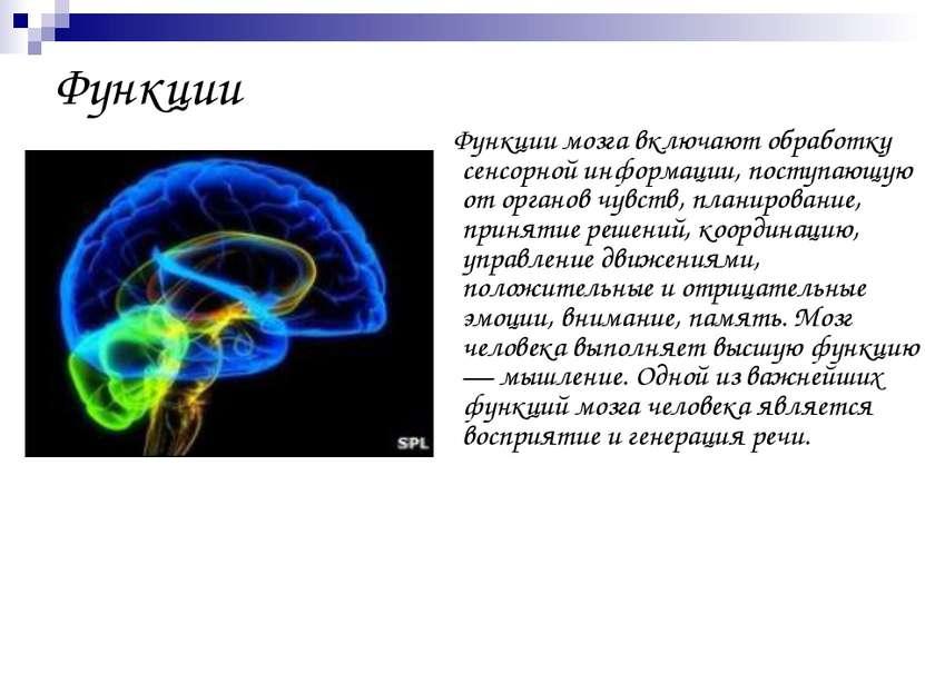 Функции Функции мозга включают обработку сенсорной информации, поступающую от...