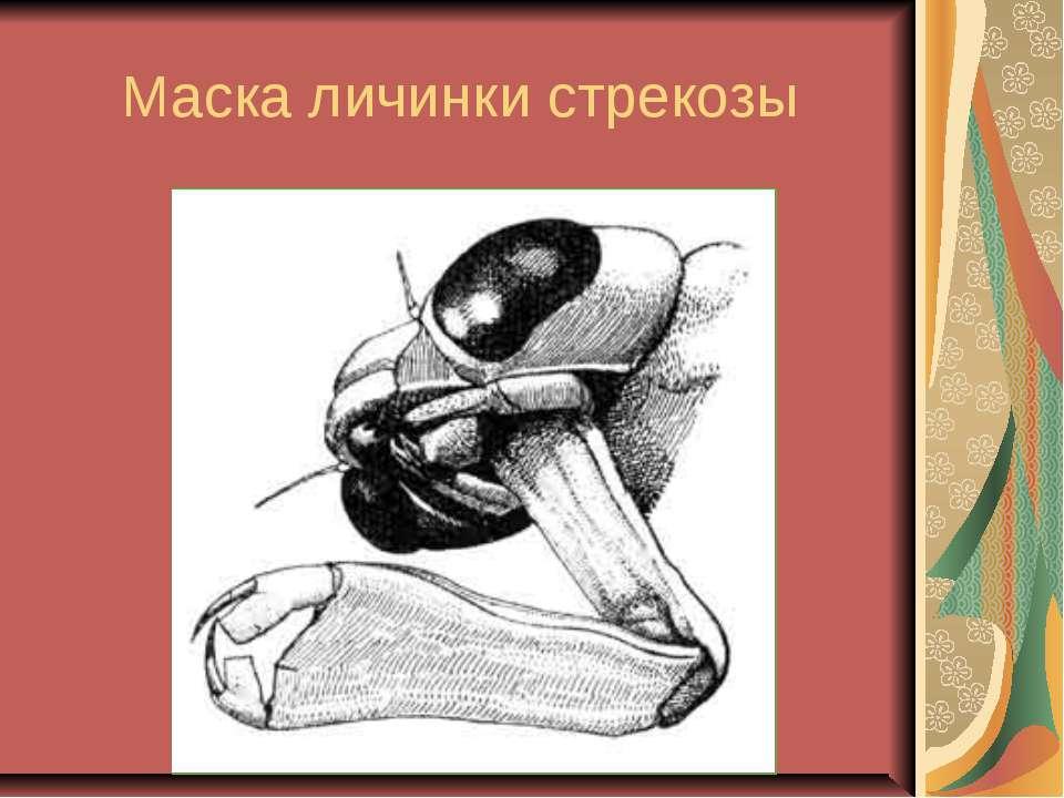 Маска личинки стрекозы