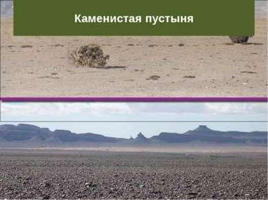 Каменистая пустыня