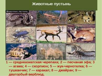 Животные пустынь 1 — среднеазиатская черепаха; 2 — песчаная эфа; 3 — агама; 4...